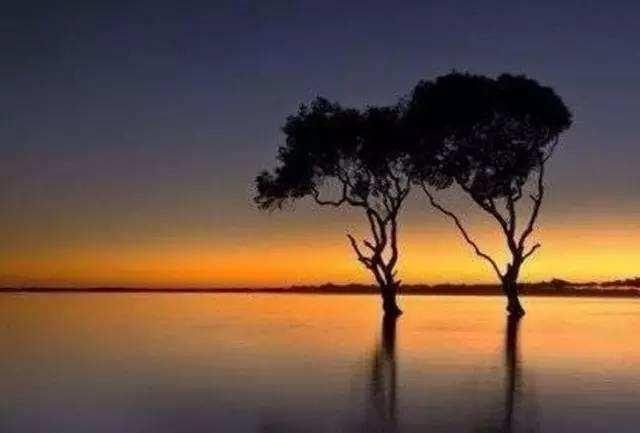 两棵树.jpg